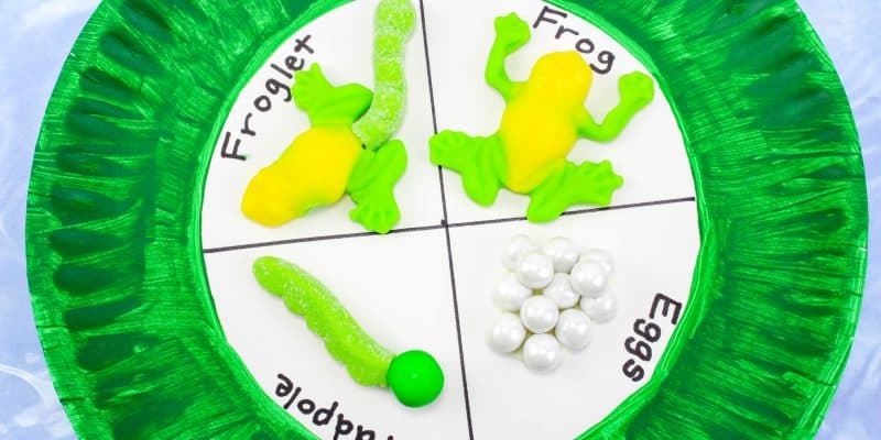 Frog Life Cycle Paper Plate Craft for Kids in Science