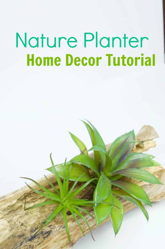 Bring Nature Indoors: DIY Inexpensive Nature Planter Home Decor Tutorial