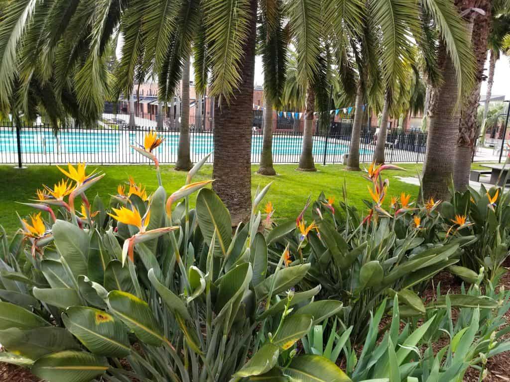 pool and tropical plants at Pixar