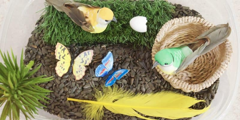 Birds & Butterflies Nature Sensory Bin Idea for Preschoolers