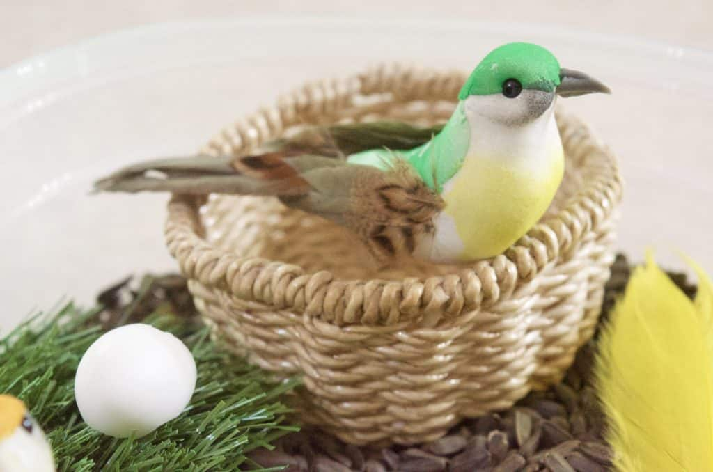 bird in nest nature sensory bin idea