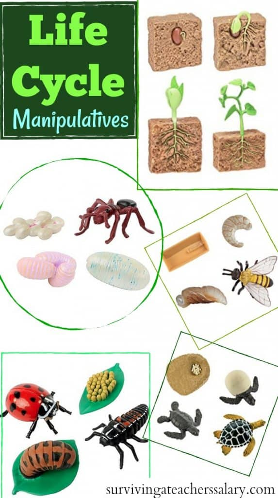 life cycle toys for learning science