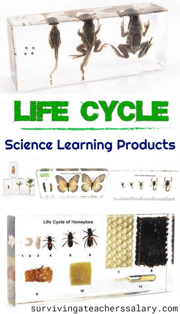 Life Cycle acrylic block paperweights