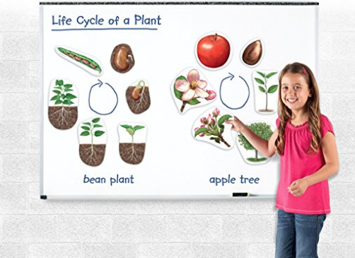 plant life cycle magnetic set