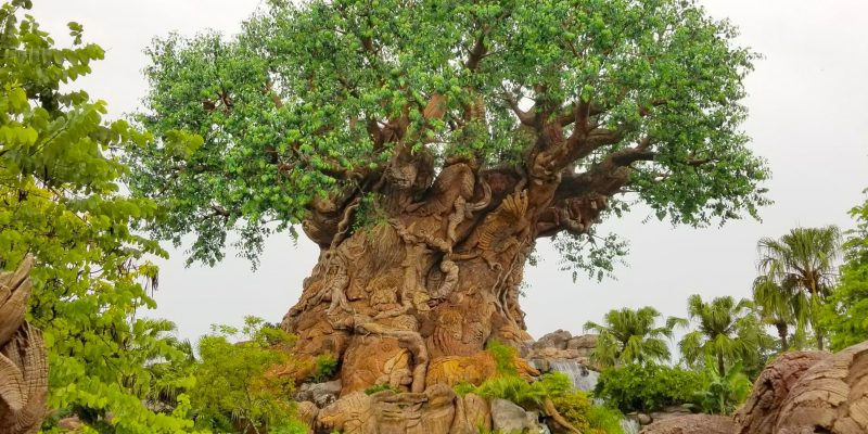 Tree of Life at Disney Animal Kingdom theme park