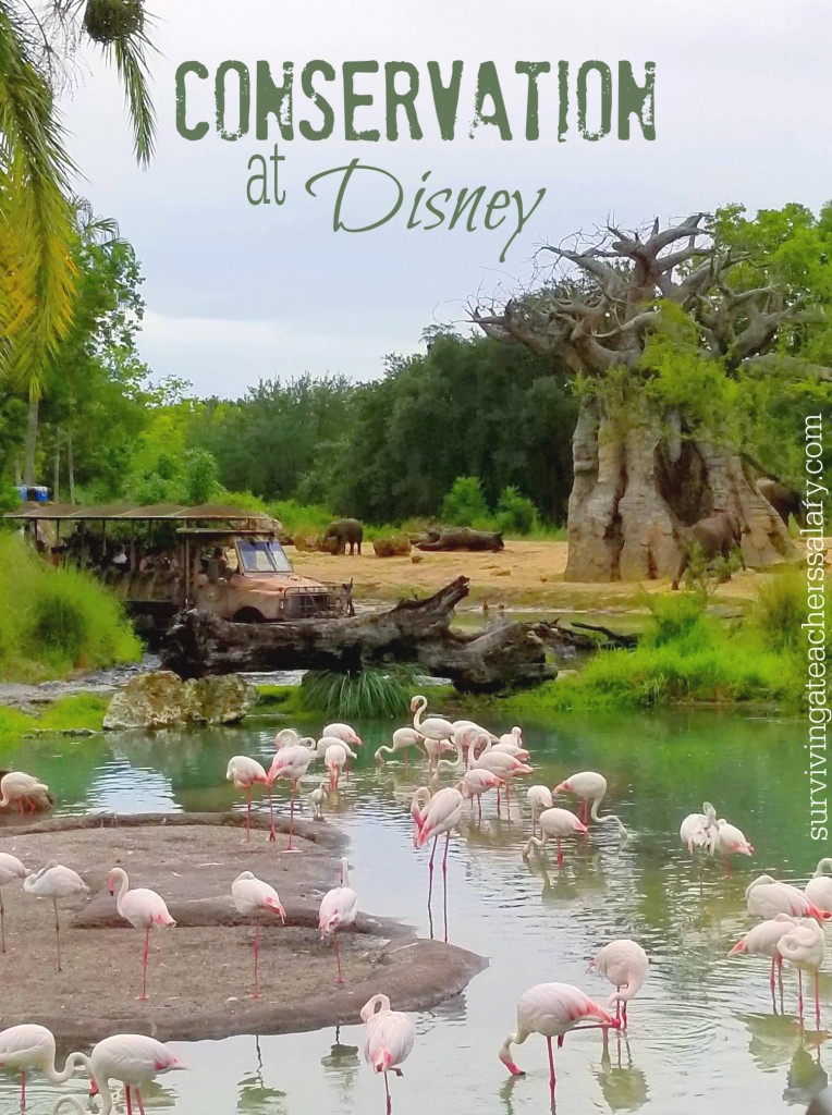 flamingos and conservation nature disney