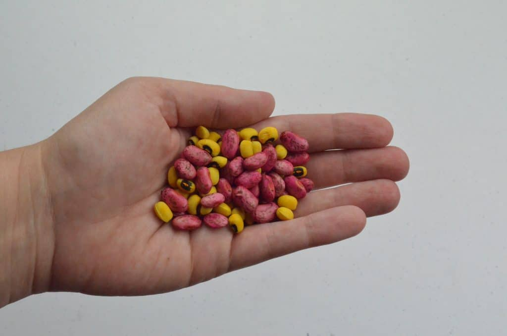 handful of colored beans for sensory play
