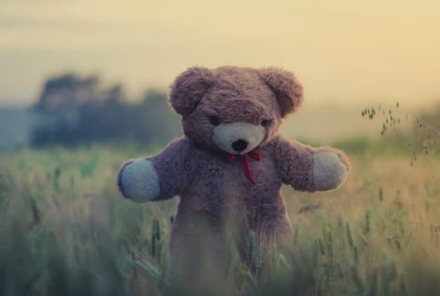 stock teddy bear in grass photo
