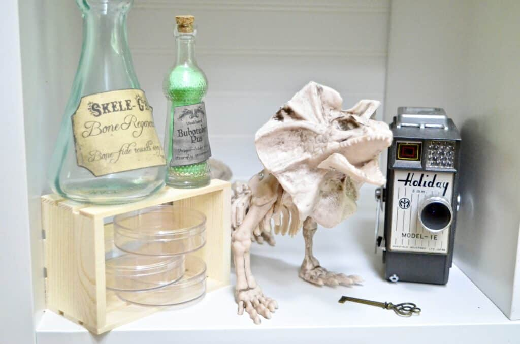 naturalist lab skeleton science equipment