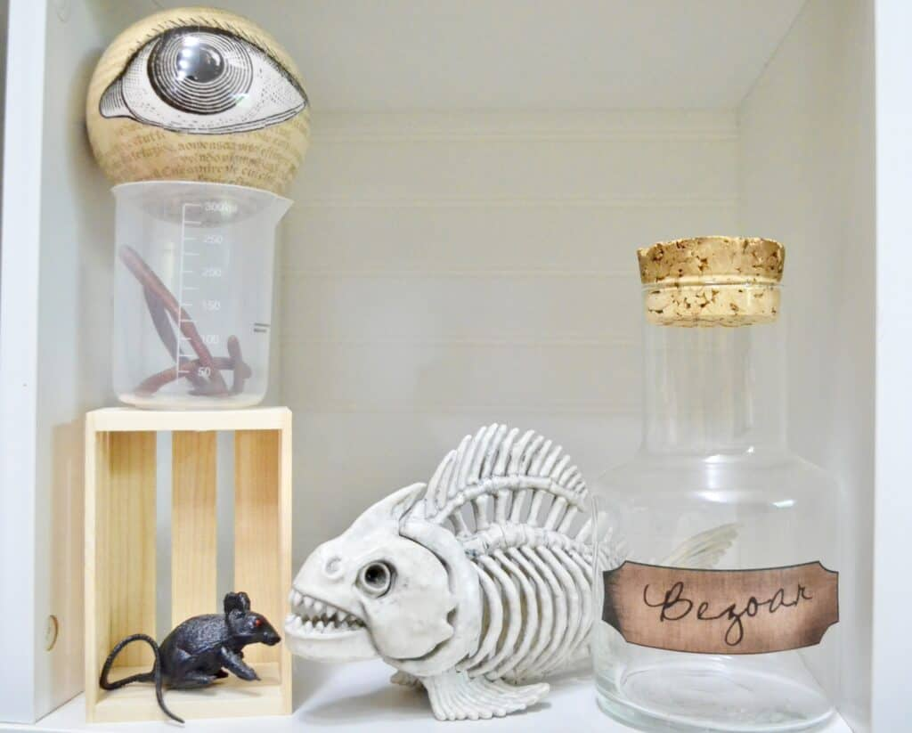 fish skeleton eyeball science lab decor