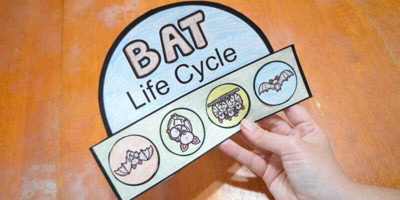 Free Printable Bat Life Cycle Hat Template