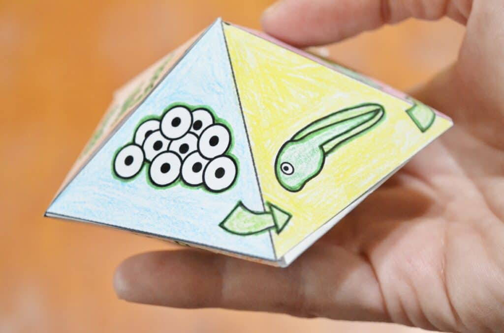 Free Printable Frog Life Cycle Spinner Top Game