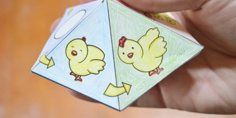 Free Printable Chicken Life Cycle Spinner Top Game