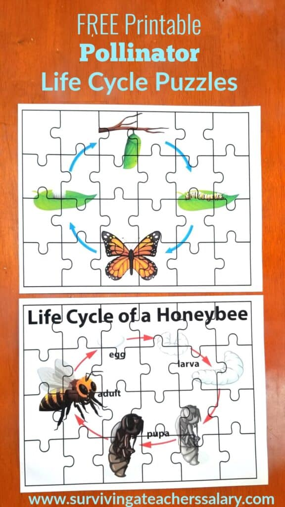 life cycle puzzles bee butterfly