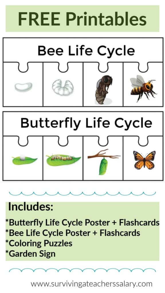 bee butterfly life cycle puzzles