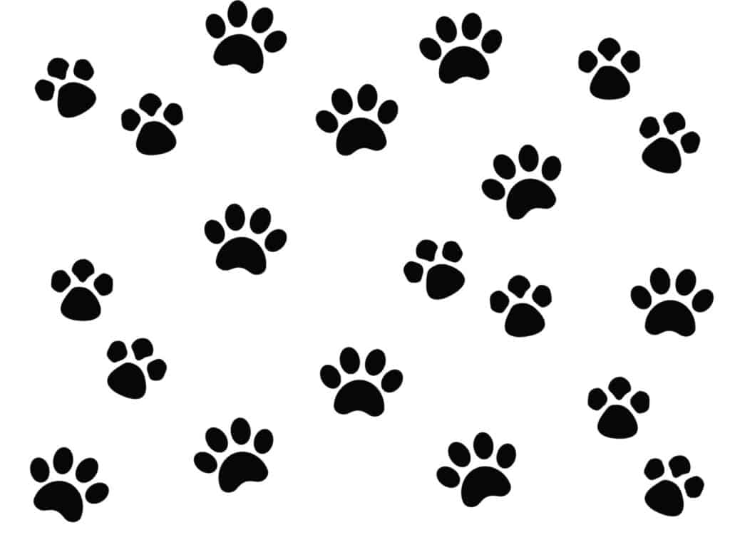 black and white paw print wrapping paper