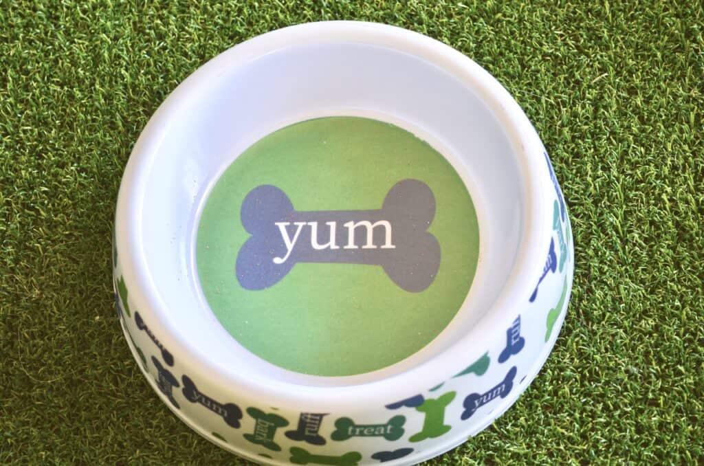 dog bowl on grass pad