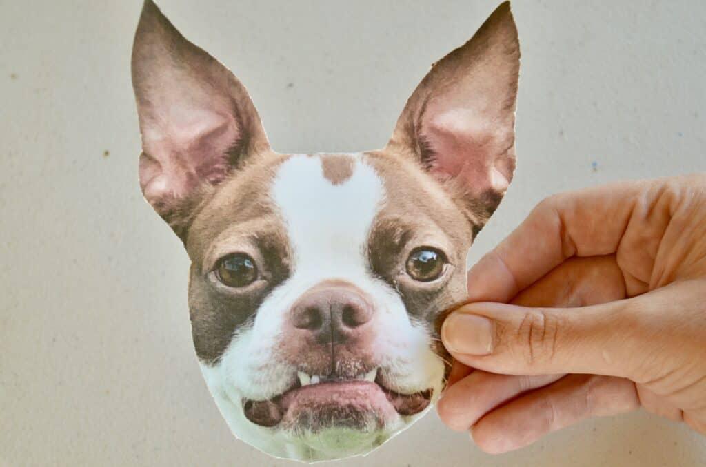 Boston Terrier dog craft