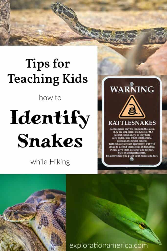 how to identify snakes