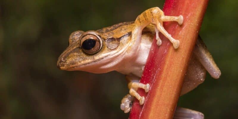 tree frog stock