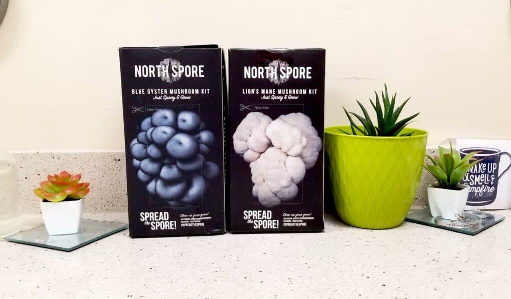 mushroom kits on countertop