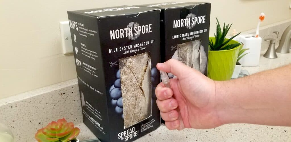 spritzing water on mushroom kit