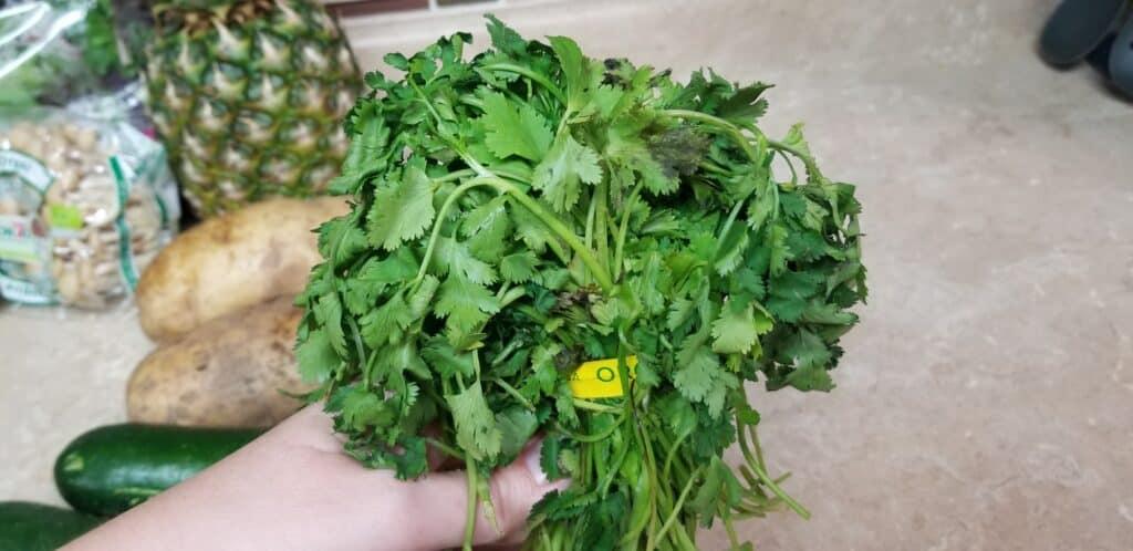 wilting bunch of cilantro
